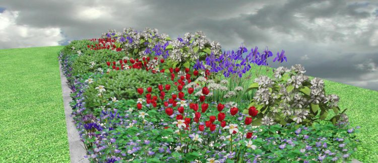WR1 Rabata wiosenna długo kwitnąca